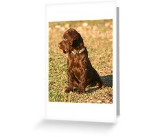 Boykin pup with spent shotgun shell Greeting Card