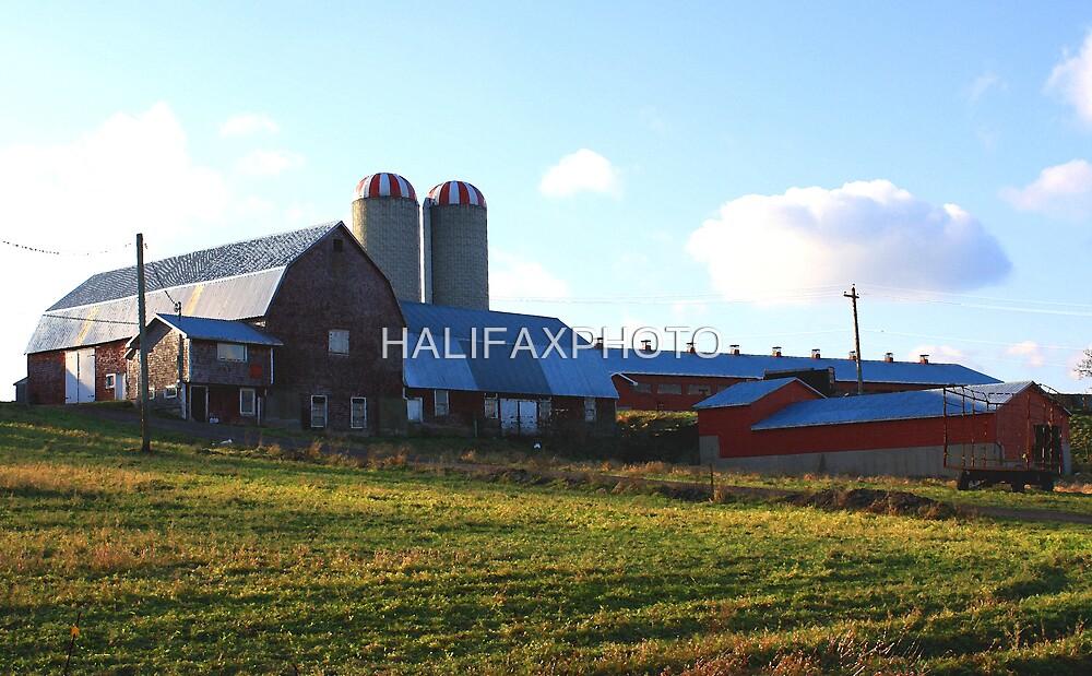 Farm Scene by HALIFAXPHOTO