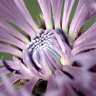 Up Close & Purple by Amanda White