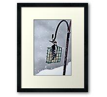 Hairy Woodpecker in the Storm II Framed Print