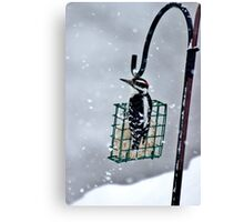 Hairy Woodpecker in the Storm II Canvas Print