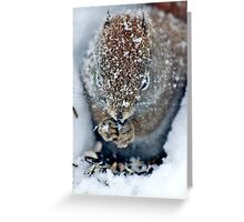 North American Red Squirrel II Greeting Card