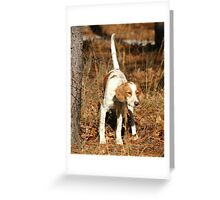 English Setter pup on point Greeting Card
