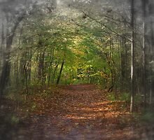 Forest Path by Jessica Kruer