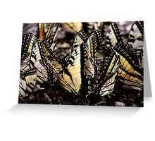 Butterfly Gathering Greeting Card