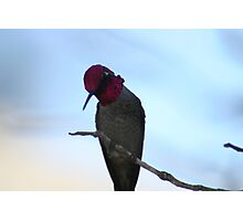 the Masked Birdito Photographic Print