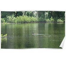 green lake water Poster