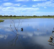 Edithvale Wetlands by Tom Newman