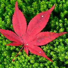 Red Leaf by ArtInMotion