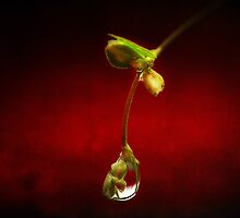 Tears in the rain by Dragos Dumitrascu