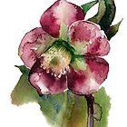 flower by OlgaBerlet