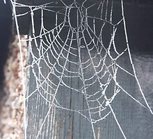 The web by Fiona Parkin