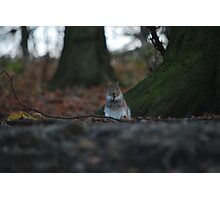Small squirrel...Big World! Photographic Print