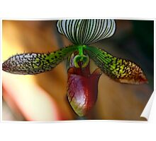 Beauty Of An Orchid Poster