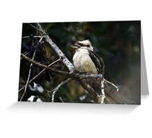 Kookaburra sitting in the old Gum Tree Greeting Card
