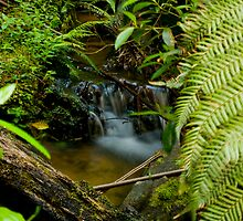 The Small Cascade by Tony Lin