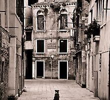Dog meets Alley by Jackco  Ching