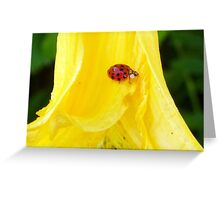 Cutie on Faded Beauty Greeting Card