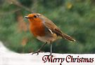 Merry Xmas 1 by davesphotographics