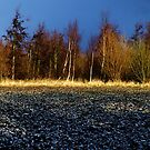 Line of Trees by David Hawkins-Weeks