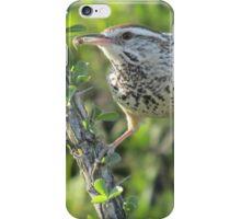 Cactus Wren on Ocotillo iPhone Case/Skin