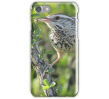 Cactus Wren on Ocotillo iPhone Case/Skin