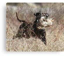 Chocolate Lab with Duck Canvas Print