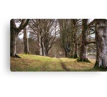 Lanhydrock Woodland,Cornwall Canvas Print