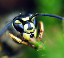 Wasp by Russell Couch