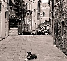 Dog Waiting by Jackco  Ching
