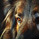Kind Eyes by Bine
