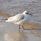 sea gull by elena7