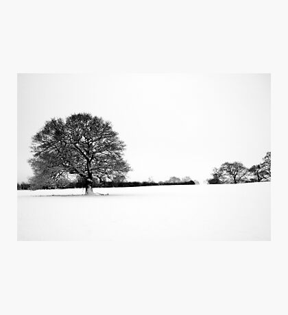 Snow and Tree Photographic Print