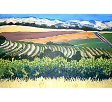 View from Chapel Hill Winery, McLaren Vale Photographic Print