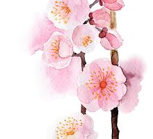 watercolor flowers of apricot by OlgaBerlet