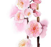 watercolor flowers of apricot by OlgaBerlet