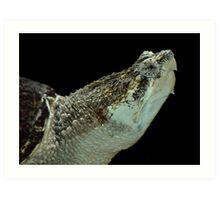 Alligator Snapping Turtle Art Print