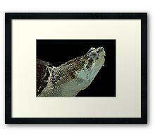Alligator Snapping Turtle Framed Print