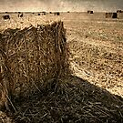 harvest by Victor Bezrukov
