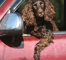 Twist in the Driver's Seat by Pamela Kadlec