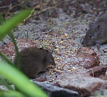 Western Australian Marsupials by MrMelacca
