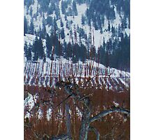 Orchards in Winter Photographic Print