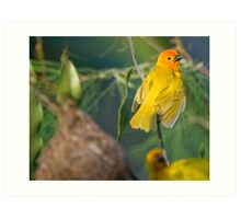 Golden Palm Weaver Art Print