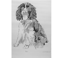 Bruce The Springer Photographic Print