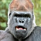 Portrait of a Silverback by Steven  Agius