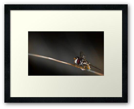 Take off by Larrikin  Photography