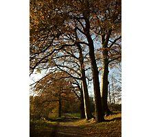 Caressing Autumn Trees Photographic Print
