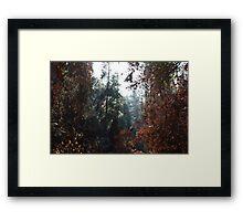 Fire & Life Framed Print