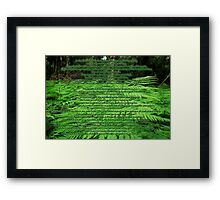 In the Darkness of the Forest...... Framed Print