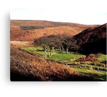 On the Edge of the Moors Canvas Print